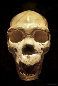 Museo MEH. Miguelón, cráneo de homo heidelbergensis. © Mercedes Peláez.