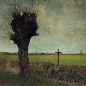 Uno de la cincuentena de olmos que hay en el camino de la ermita, en la exposición presenta Una mirada romántica al territorio.