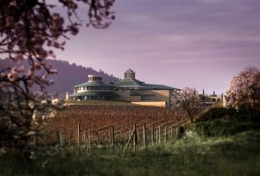XII Congreso de Museos del Vino de España