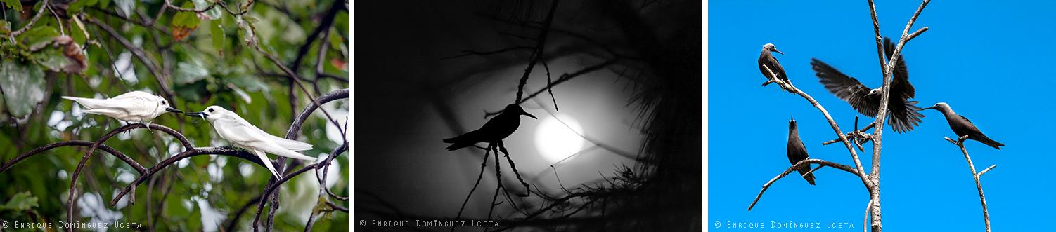 Aves en Bird Island, Seychelles © Enrique Domínguez Uceta