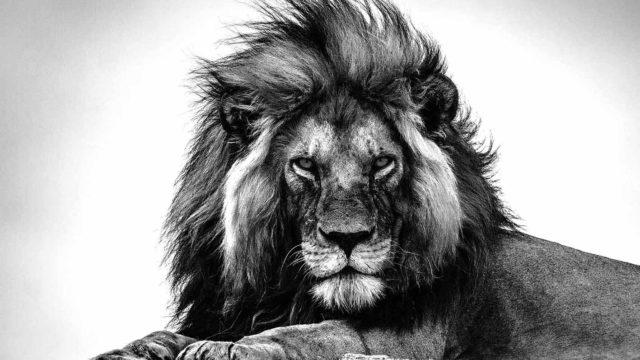 Gaby Guiard: la vida salvaje de África