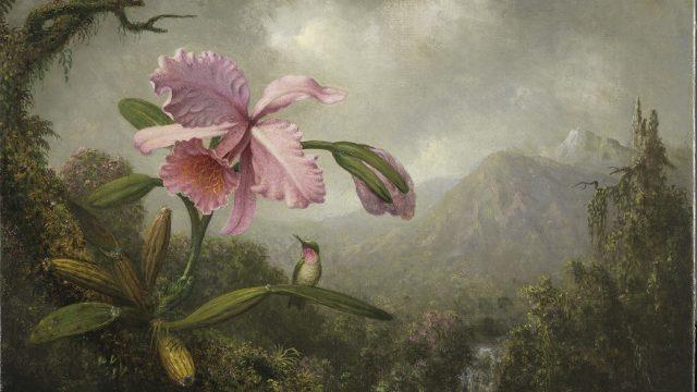 Orquídea-y-colibrí-cerca-de-una-cascada-1902-por-Martin-Johnson-Heade.jpg