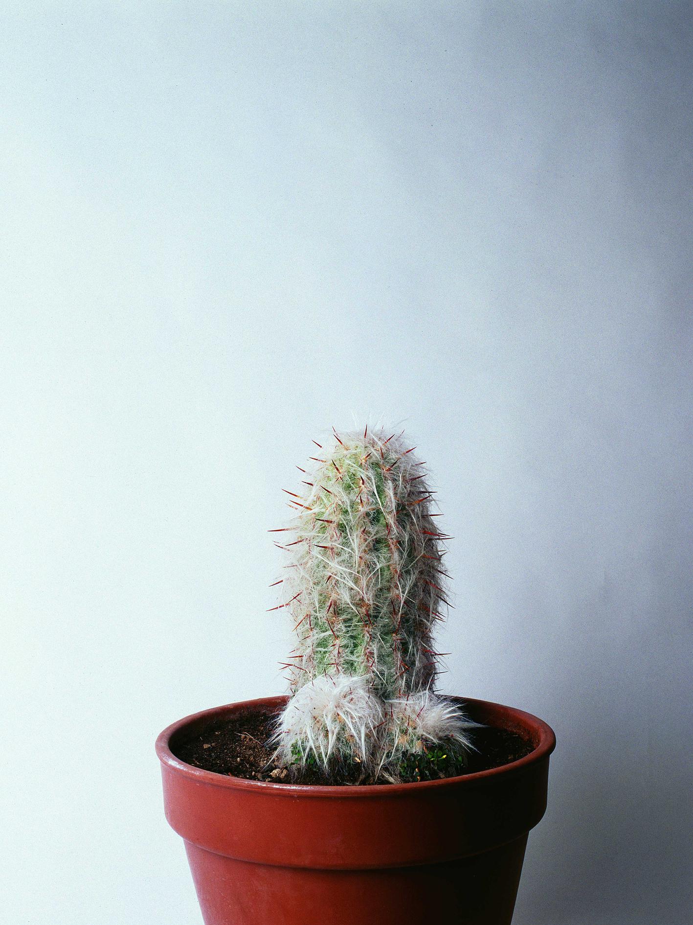 Un cactus más, de Juan Hidalgo, galería Adora Calvo.