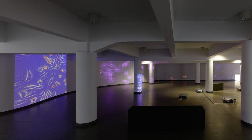 Exposición de bioart en LABoral Centro de Arte, Gijón.